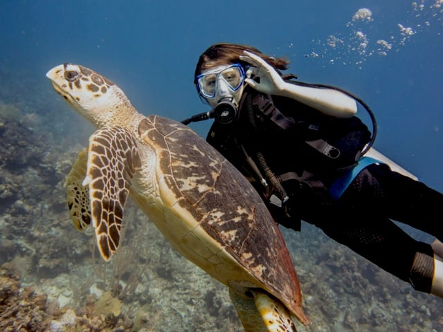 Roatan diving with turtles!