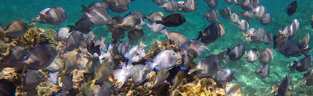 Roatan diving packages combine the comfort of a resort and the adventure of scuba diving during your vacation.