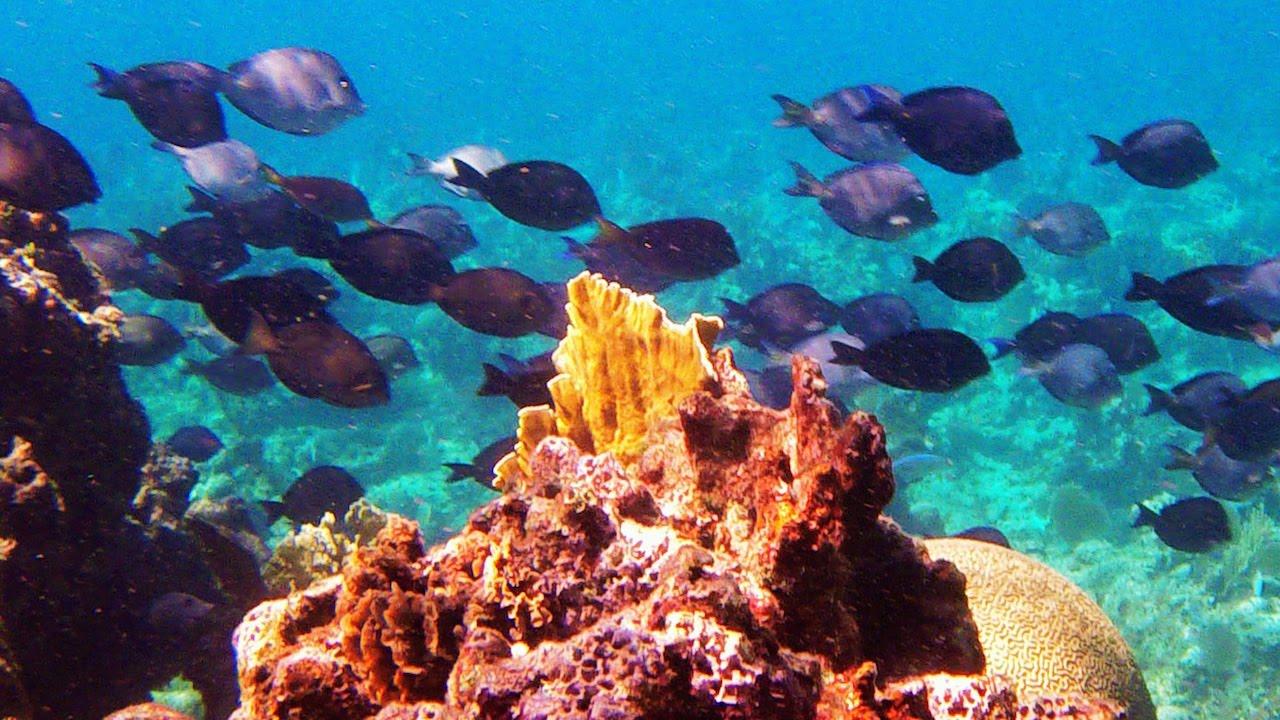 Half moon bay wall roatan diving sites splash inn - Roatan dive sites ...