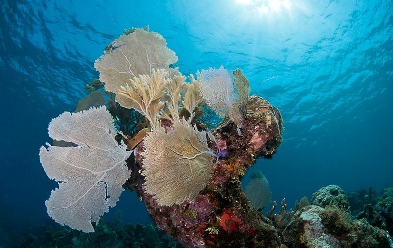 White hole roatan diving sites splash inn - Roatan dive sites ...
