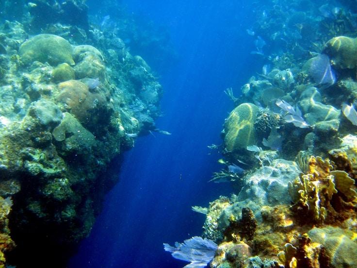 West End Hotel in Roatan, Roatan Dive Sites - Splash Inn