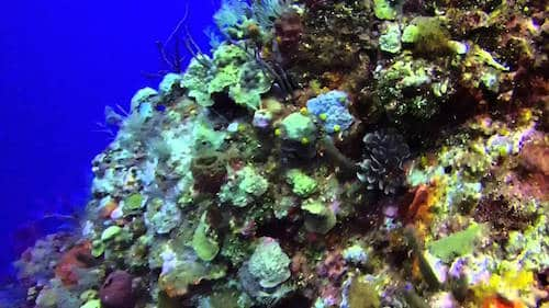 Turtle crossing roatan diving sites splash inn - Roatan dive sites ...