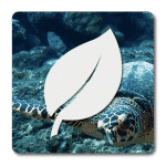 Naturalist Diver Certification Course