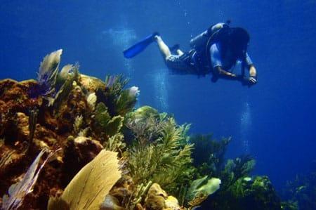 roatan-discover-scuba