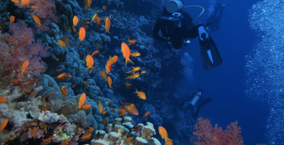 roatan-dive-resort
