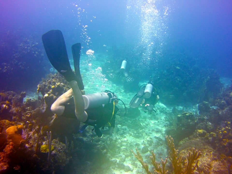 padi-open-water-roatan