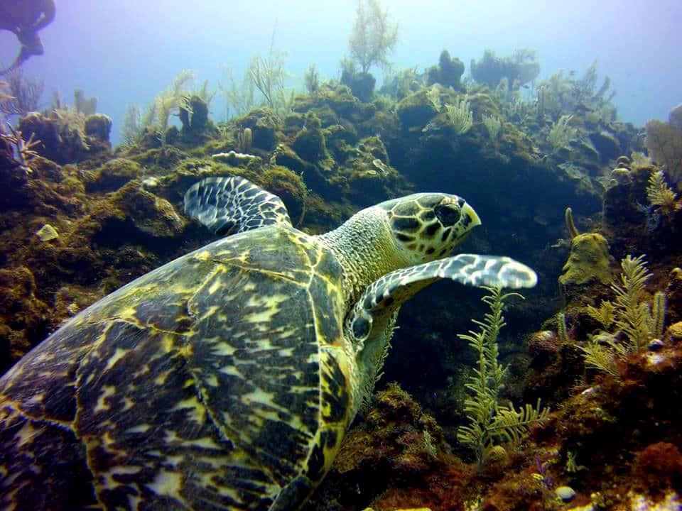 turtle-advanced-open-water